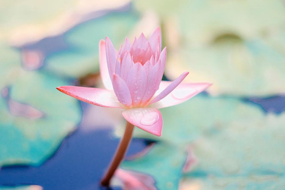 psicologia-mindfulness